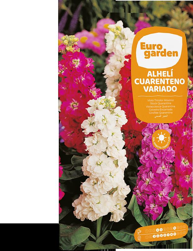 Mockup Sobre Individual Eurogarden Flores Alhelí Cuarenteno Variado