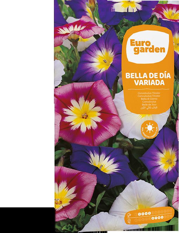 Mockup Sobre Individual Eurogarden Flores Bella de Día Variada