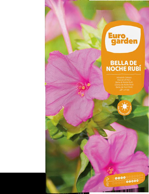 Mockup Sobre Individual Eurogarden Flores Bella de Noche Rubí