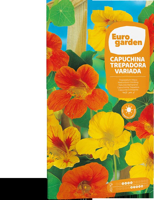 Mockup Sobre Individual Eurogarden Flores Capuchina Trepadora Variada