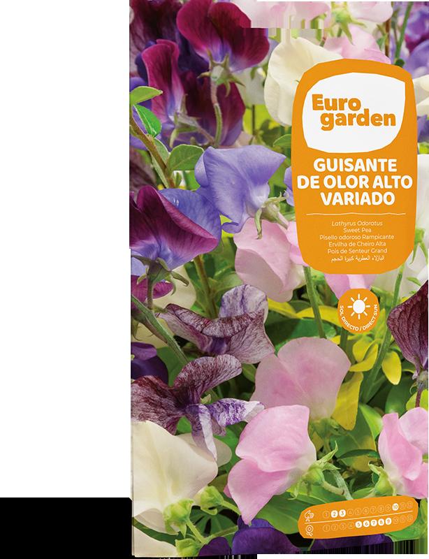 Mockup Sobre Individual Eurogarden Flores Guisante de Olor Alto Variado