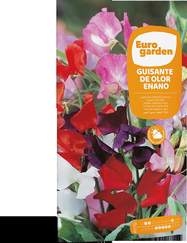Mockup Reverso Sobre Individual Eurogarden Flores Guisante de Olor Enano