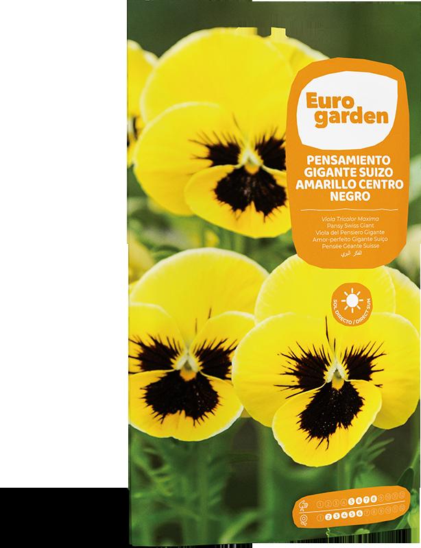 Mockup Sobre Individual Eurogarden Flores Pensamiento Gigante Suizo Amarillo Centro Negro