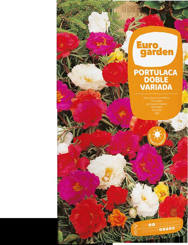 Mockup Sobre Individual Eurogarden Flores Portulaca Doble Variada