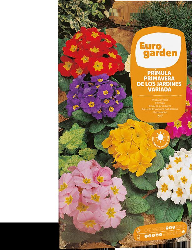 Mockup Sobre Individual Eurogarden Flores Prímula Primavera de los Jardines Variada