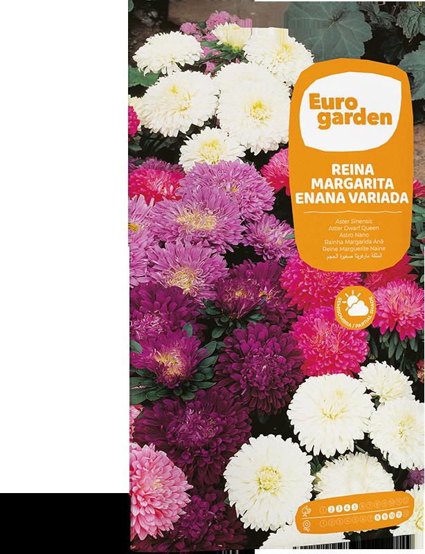 Mockup Sobre Individual Eurogarden Flores Reina Margarita Enana Variada