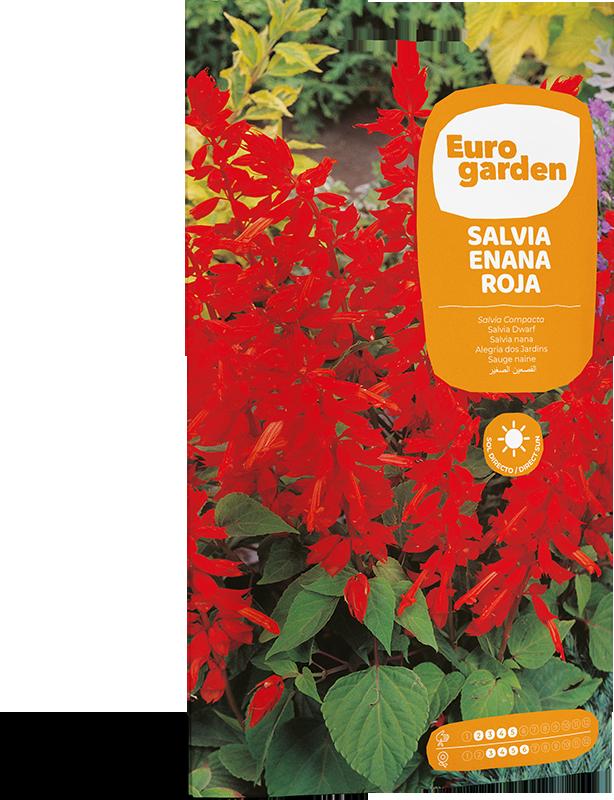 Mockup Sobre Individual Eurogarden Flores Salvia Enana Roja