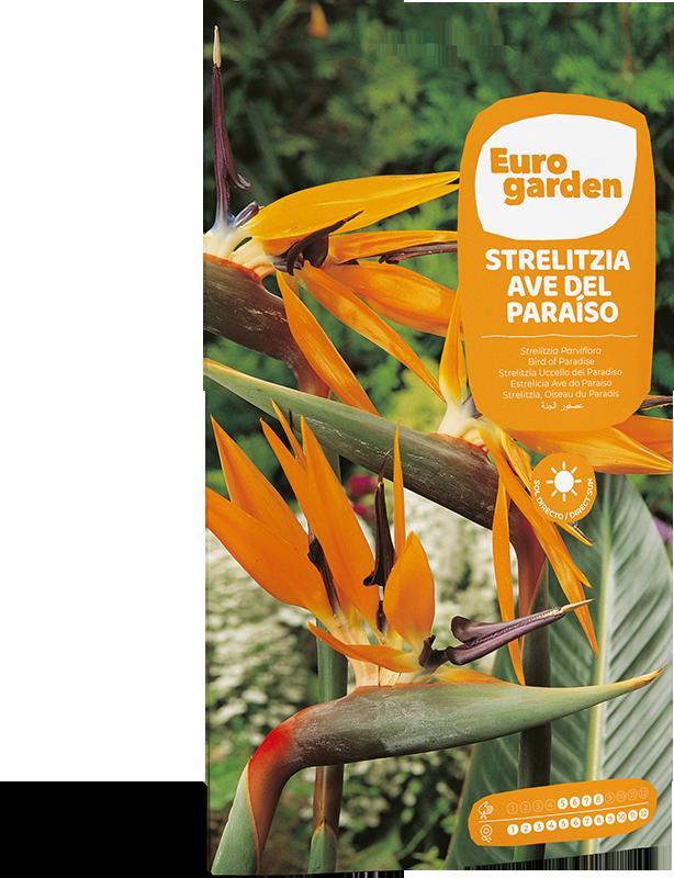 Mockup Sobre Individual Eurogarden Flores Strelitzia Ave del Paraíso