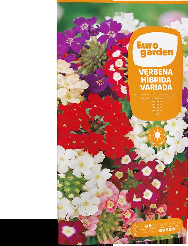 Mockup Sobre Individual Eurogarden Flores Verbena Híbrida Variada