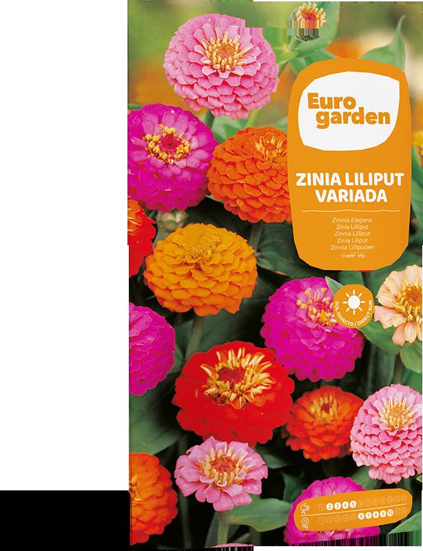 Mockup Sobre Individual Eurogarden Flores Zinia Liliput Variada