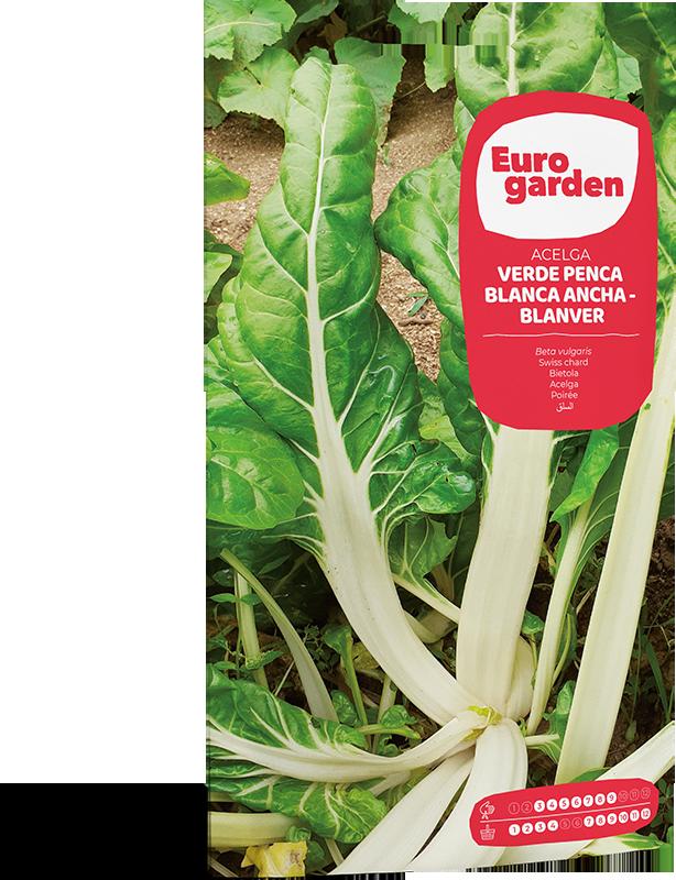 Mockup Sobre Individual Eurogarden Hortícolas Acelga Blanver