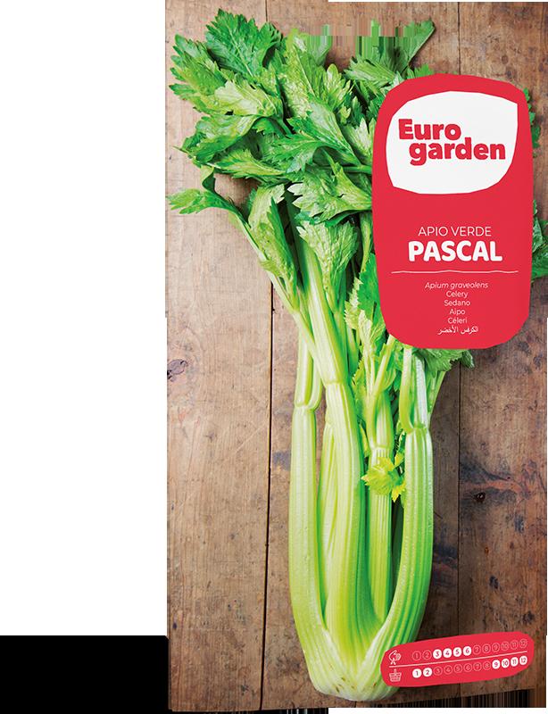 Mockup Sobre Individual Eurogarden Hortícolas Apio Verde Pascal