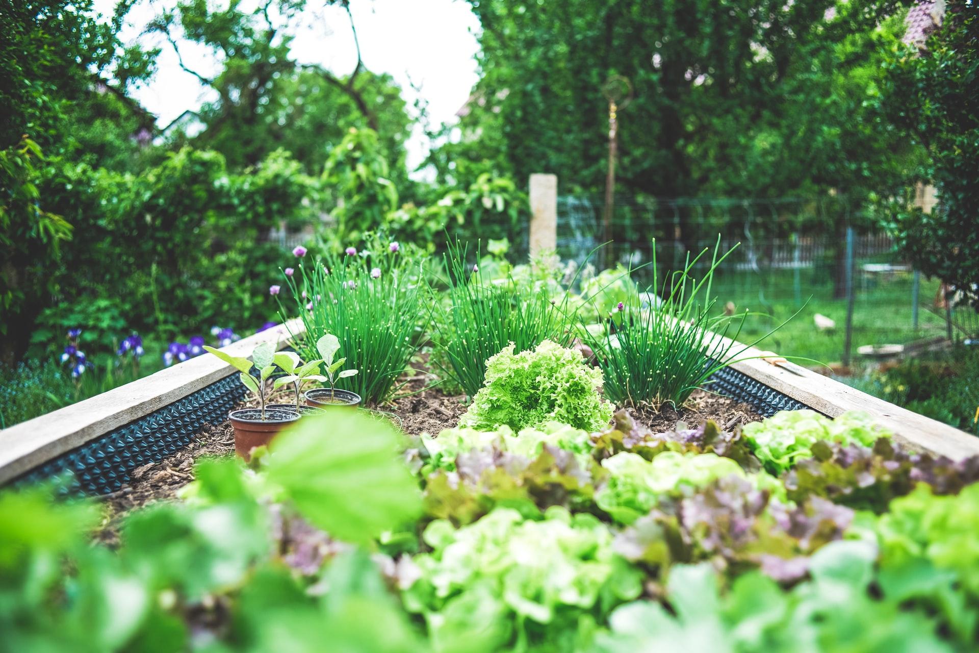 verduras platadas en un huerto urbano