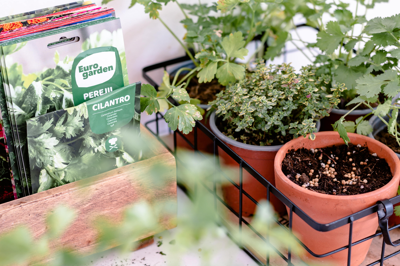 semillas para un huerto urbano